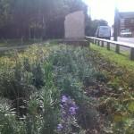 Eldon Village Community Area (4)