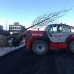 Mature Tree planting St Marys Boulevard Sunderland (8)